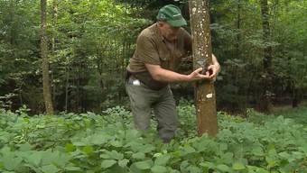 Für Jäger Charles Fehlmann ist es wie ein Sechser im Lotto: Das Foto, das die Fotofalle im Lostorfer Wald knipste, hat schon fast Seltenheitswert.
