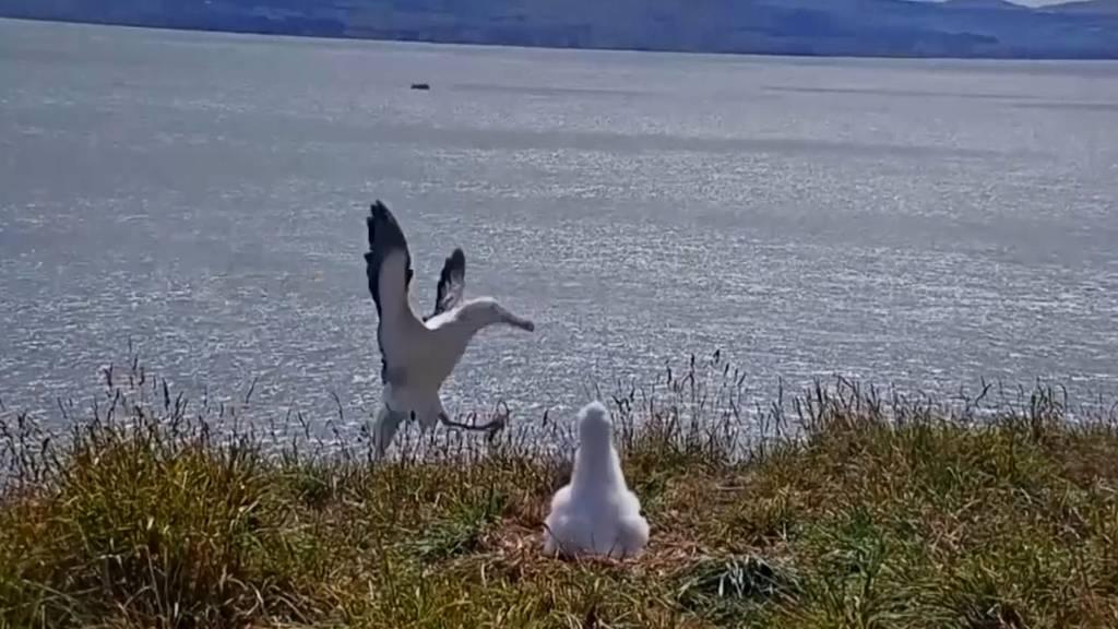 Albatros legt Bruchlandung hin und wird zum Internet-Hit