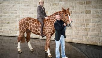 Jessica Kürten und Pius Schwizer mit Loren, dem fuchsfarbenen Freiberger Wallach, der im Stil einer Giraffe an der Pferde-Modeschau des Mercedes-Benz CSI laufen wird.