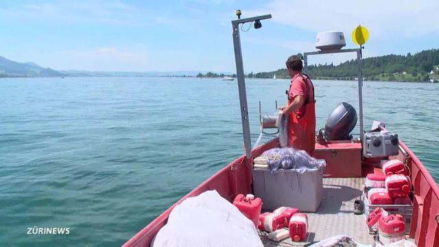 Fische aus Fischernetz gestohlen