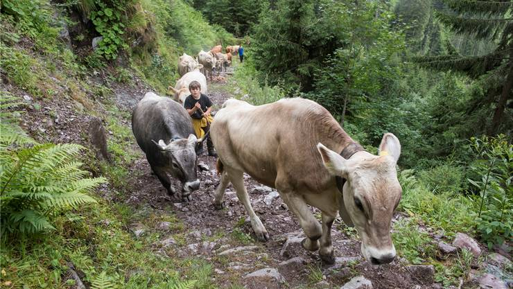 Der Weg aus handgesetzten Steinrippen trotzt seit vielen Jahren den Klauen, die aufwärts stampfen.