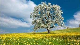 Frühlingsblüten April