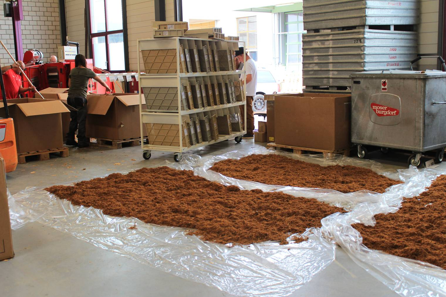 Der Tabak wird zum Trocknen ausgelegt (Bild: FM1Today/Lara Abderhalden).