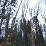 Ein europaweit einmaliges Langzeitexperiment zu Folgen des Klimawandels wird im Baselbieter Jura bei Hölstein BL vorbereitet: Die Uni Basel will dort fast 1,5 Hektaren Wald 20 Jahre lang beobachten und Dürre mittels Regendach simulieren. Ökologische Versuche laufen meist nur drei bis fünf Jahre, doch Bäume wachsen sehr langsam - Rotbuchen etwa können 300 Jahre alt werden. In Hölstein nimmt die Universität Basel eine ausgesucht artenreiche Karst-Hügelkuppe unter die Lupe, wo kein Wasser unterirdisch von aussen einsickert und Grundwasser fern ist. Herausfinden will das Team von Professor Ansgar Kahmen, wie hiesige Baumarten auf Trockenheit reagieren und ob ausgewachsene Bäume ihren Stoffwechsel anpassen können.