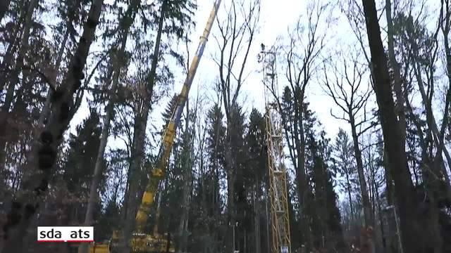 Wald im Klimawandel-Stress: Grosses Experiment der Uni Basel