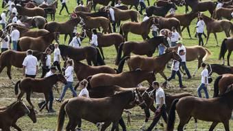 400 Freibergerpferde bei einer Parade in Saignelégier. (Archivbild)