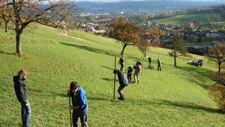 «Bonzen»-Aktion Baumpflanzaktion am Achenberg ob Küttigen. (zvg)