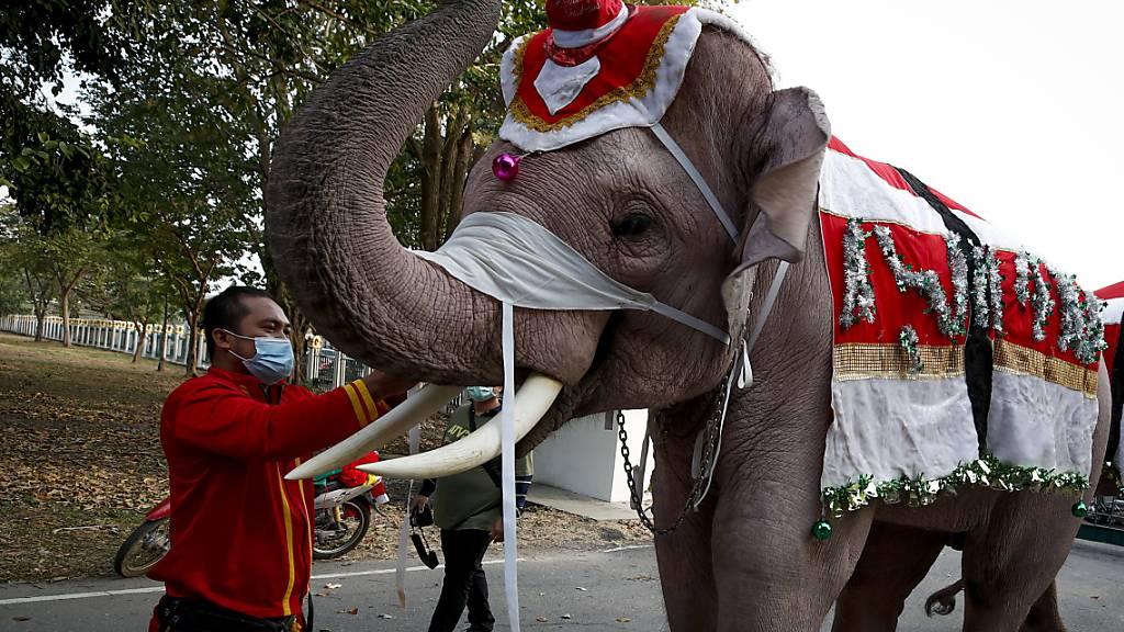 Elefanten auf Schulbesuch in Thailand - gekleidet in Weihnachts-Tracht und mit Maske zu Corona-Zeiten.