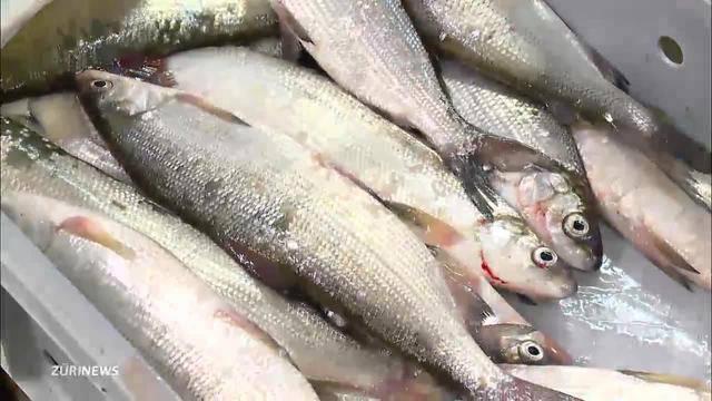 Niklas vermiest Fischern das Ostergeschäft