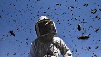 Quarantäne-Verordnung für Bienen