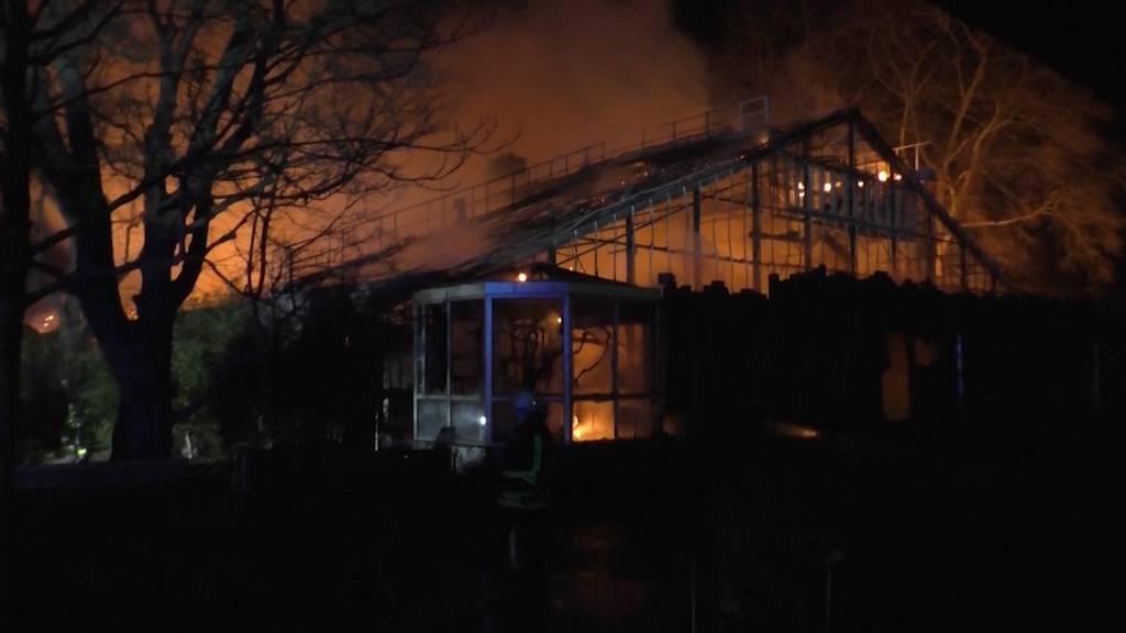 Brand im Affenhaus: Über 30 Tiere gestorben