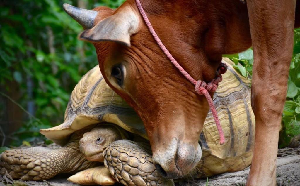 Tierfreunde Leonardo und Simon (© (Wildlife Friends Foundation Thailand))