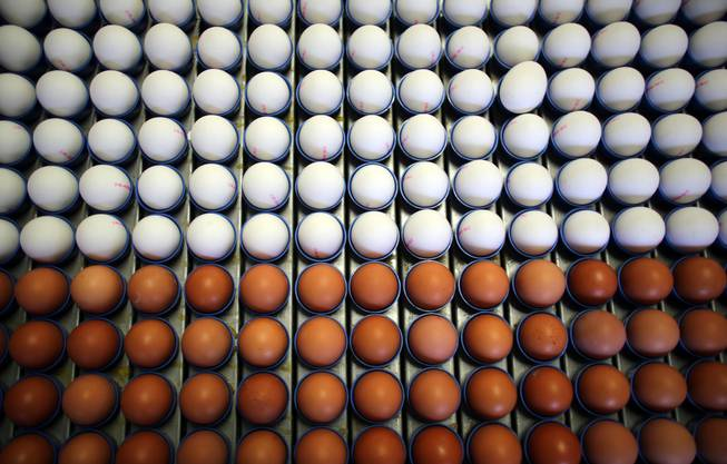 Legen braune Hühner braune Eier? Nicht unbedingt. Die braune oder weisse Farbe der Eier hängt nicht mit der Gefiederfarbe des Huhns zusammen. Bei reinrassigen Hühnern spielt vielmehr die Farbe der Ohrläppchen des Huhn eine Rolle. Diese nennt man Ohrscheiben. Eine Henne mit roten Ohrscheiben legt braune Eier, eine mit weissen Ohrscheiben legt weisse Eier.