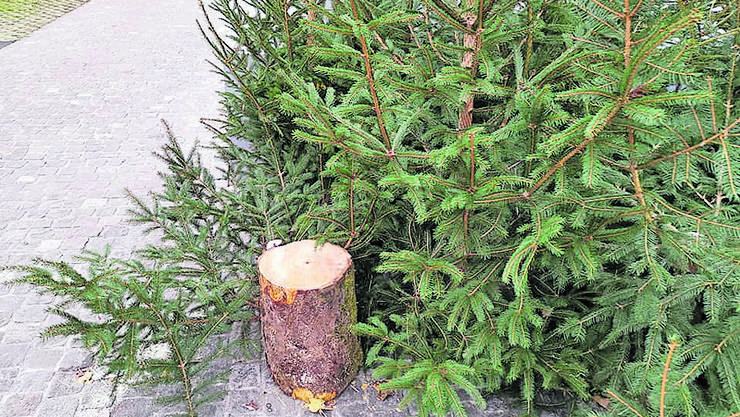 Ein Unbekannter sägte zwei Tannenbäume ab.