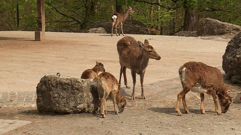 Frühlingserwachen im Tierpark