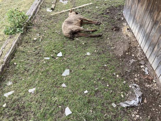 Der Tierhalter wurde festgenommen. Verdacht: Tierquälerei. Alle vorgefundenen Tiere waren bereits tot und verwest oder in einem miserablen Zustand.