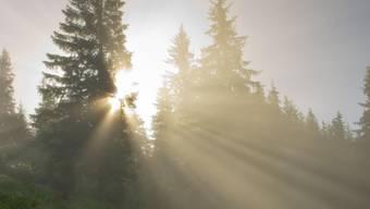 Klimawandel bedroht Aargauer Bäume