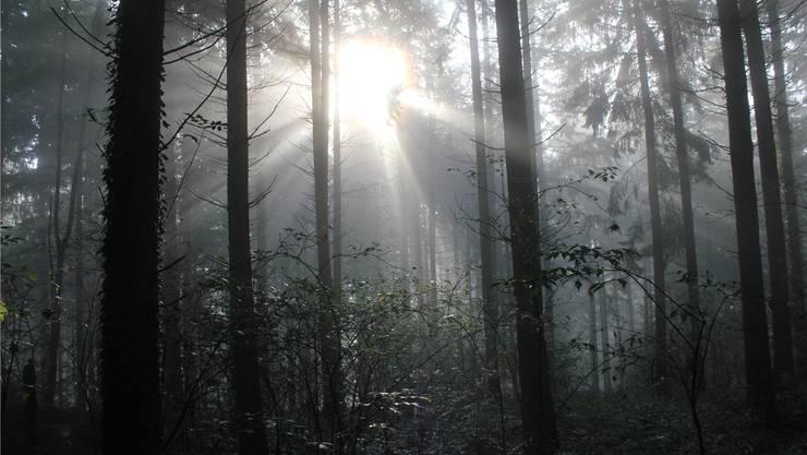 Der 37-jährige Algerier zwang sein betrunkenes männliches Opfer, mit ihm in den Wald zu gehen, wo es zum erzwungenen Analverkehr kam. Christof Ramser