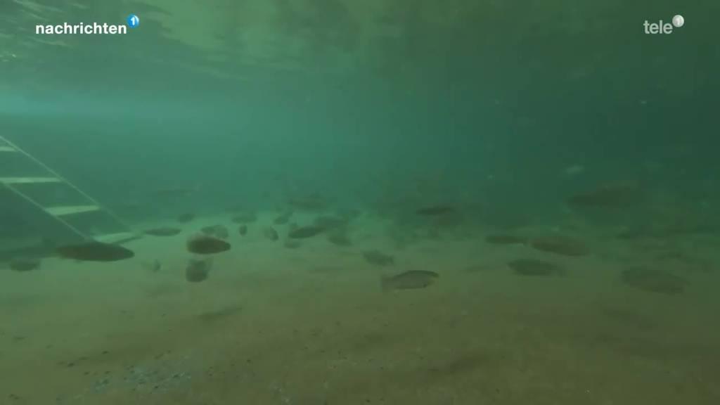 Forellenzucht Muotathal
