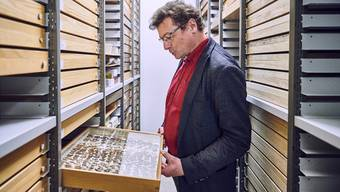 Der Biologe Christian Kropf findet alle paar Monate eine neue Tierart im Keller des Naturhistorischen Museums Bern.