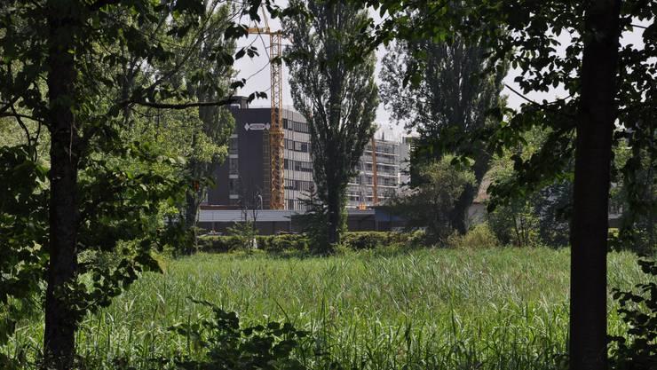 Flachmoor Antoniloch in Dietikon, im Gebiet Silbern-Lerzen-Stierenmatt (SLS) soll geschützt werden.