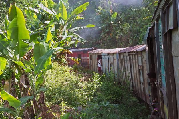 Der Zug kämpft sich den Dschungel hoch