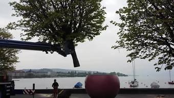 Ein Baum wird abtransportiert.