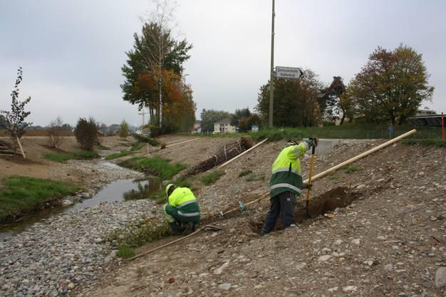 Die Wurzel der Bäume sollen künftig den Boden ums Bachbett stabilisieren und vor Erosion schützen.