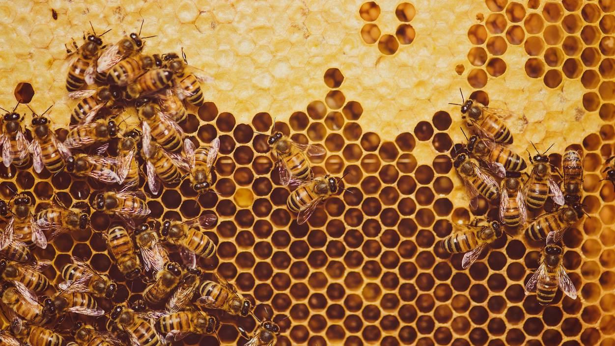 Bienen_Bienenstock_Honig_Waben
