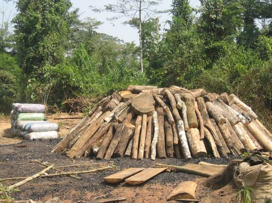 Holzkohlemeiler aus Tropenholz: Hauptsächlich der Export dieses Naturprodukts bis nach Europa gilt als Bedrohung des Regenwaldes.