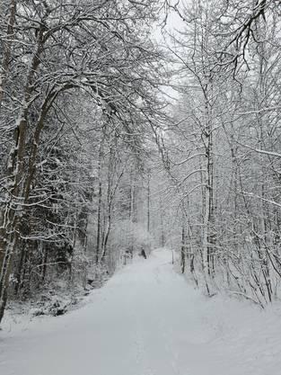 Winter Wunderland: Am Dienstag hüllte Frau Holle das Limmattal in eine weisse Schneedecke.