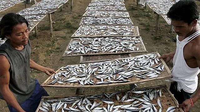 80% der Fischbestände sind überfischt