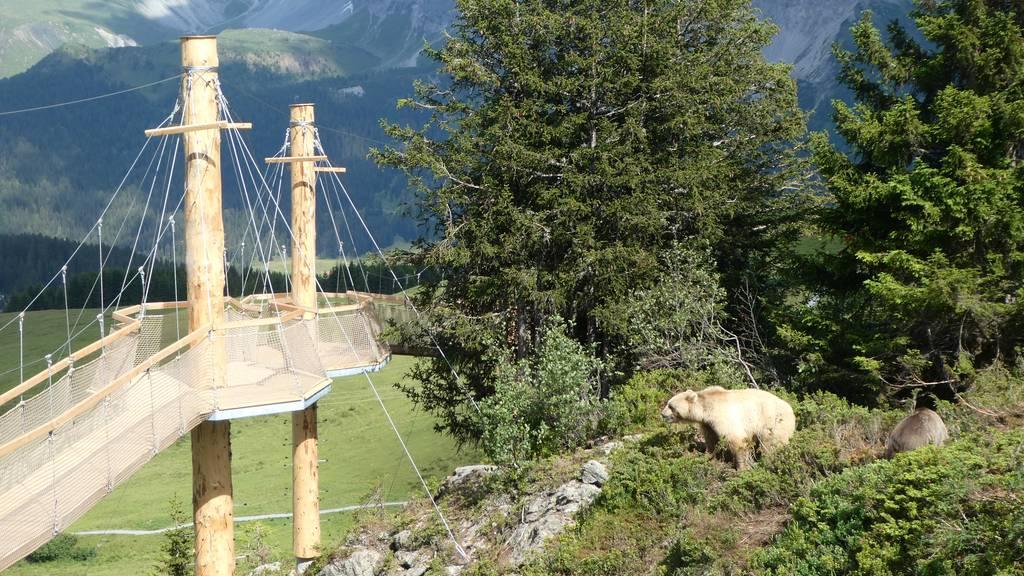 Im Bärenland gibt es jetzt einen Abenteuerweg