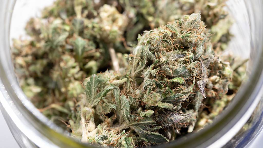 New Yorker Parlament verabschiedet Gesetz zur Cannabis-Legalisierung