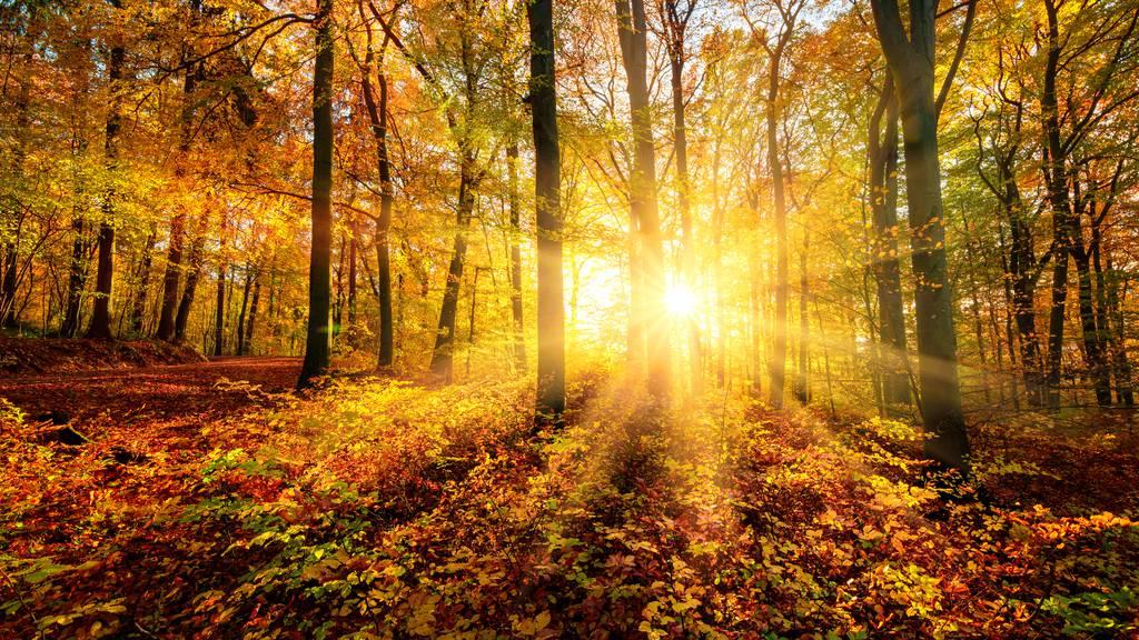 Es wird ein sonniges und mildes Herbstwochenende