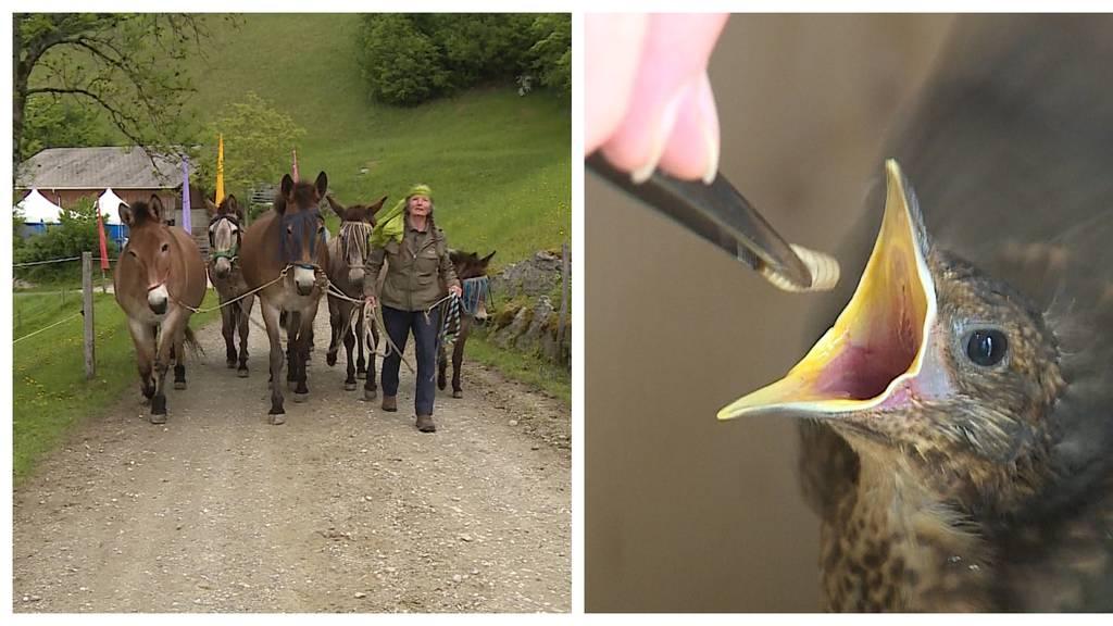 Pferd oder Esel? / Wildvogel Pflegestation