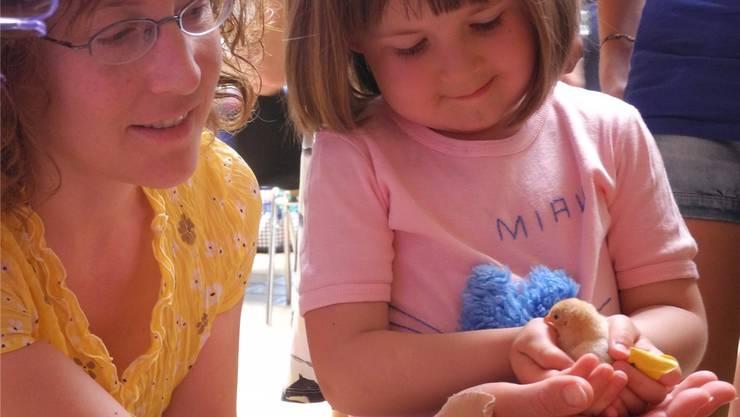 Soben aus der Eierschale gekrochene Küken erfreuten Klein und Gross. Dominique Bitschnau