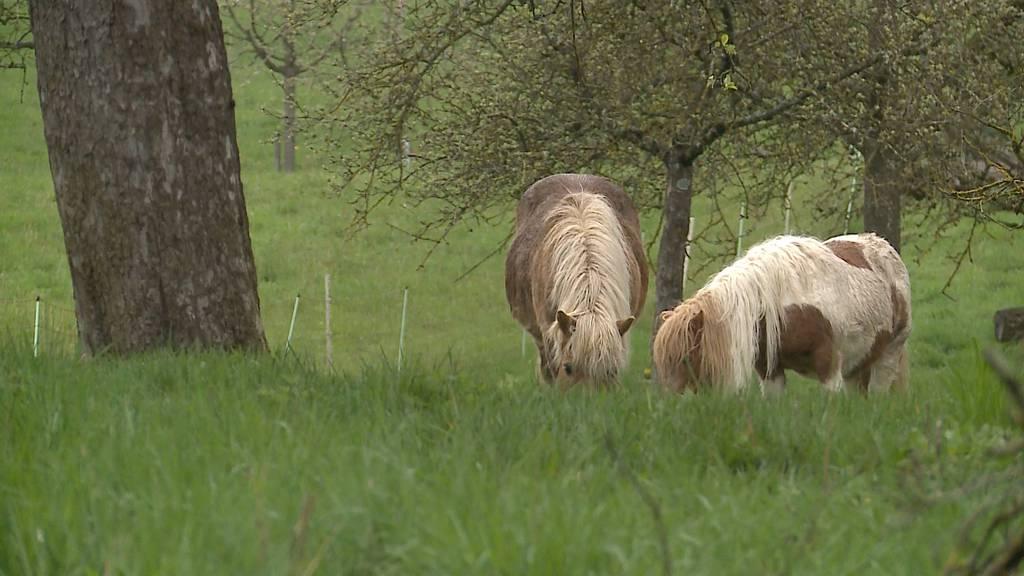 """Happy End für Ponys: """"Sehr viele haben angerufen"""""""