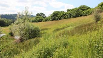 Die dunklen Stellen in einem Pro-Natura-Schutzgebiet im Reusstal zeigen, wo die Sumpfquellen austreten. Pro Natura
