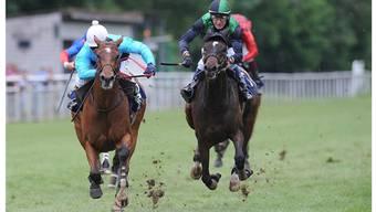 Auch dieses Wochenende wieder ein Favorit im Aarauer Schachen: Das erfahrene Pferd Oh Calin (links).