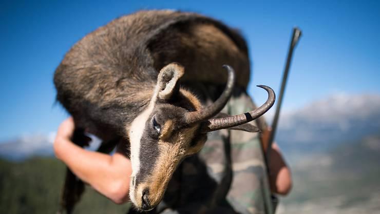 Die Walliser Jäger haben bei der diesjährigen Hochjagd mehr Gämsen erlegt. (Archivbild)