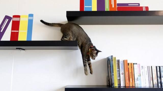 Domestizierte Katzen: Das Haus ist ihre Wildnis