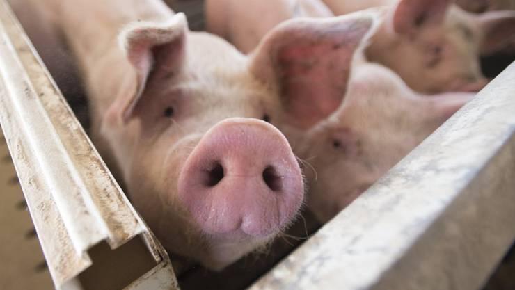 Rund sechs Wochen vor dem Urnengang stimmen 64 Prozent der Stimmberechtigten für die Fair-Food-Initiative der Grünen.