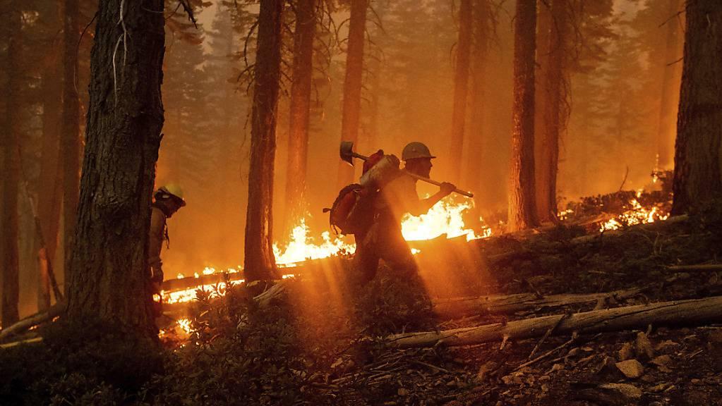 Feuerwehrmänner sind im Einsatz, um den Brand im Norden des Waldgebietes «Plumas National Forest» im Bundesstaat Kalifornien einzudämmen. Foto: Noah Berger/AP/dpa
