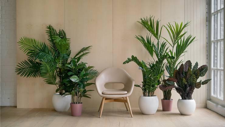 Wurden Zimmerpflanzen lange mit Spiessigkeit gleichgesetzt, sind sie mittlerweile zum unverzichtbaren Einrichtungsaccessoire geworden. Mit gutem Grund.