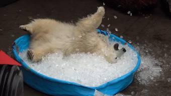 Im Wasser planschen ist etwas für Warmduscher: Nora bevorzugt Eiswürfel.