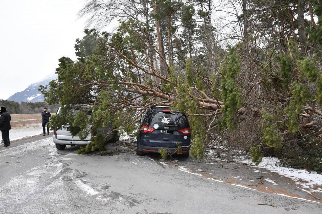 In Balzers ist ein Baum umgekippt (© Landespolizei Liechtenstein)