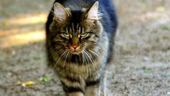 In Magden werden Katzen vergiftet.