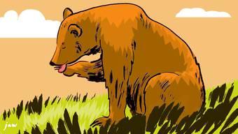 Der Bär saugt zum letzten Mal an seiner Hungerpfote.