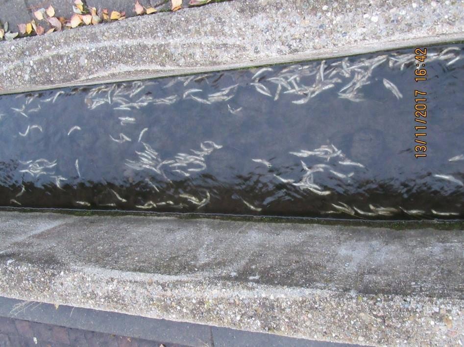 Entsorgte Sardinen (© Polizei Konstanz)
